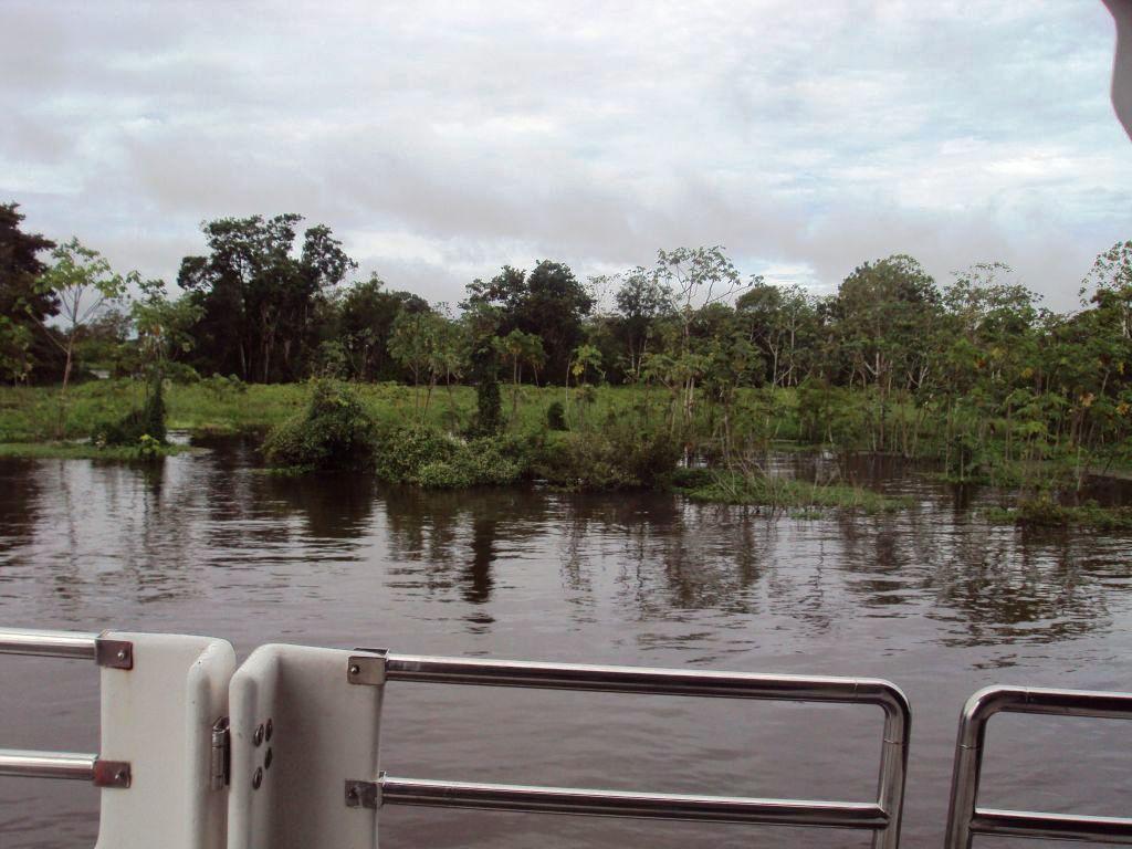 アマゾン・フェリー:岸に近づいて密林を見る。
