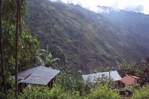 コロンビアのアンデス。熱帯雨林。