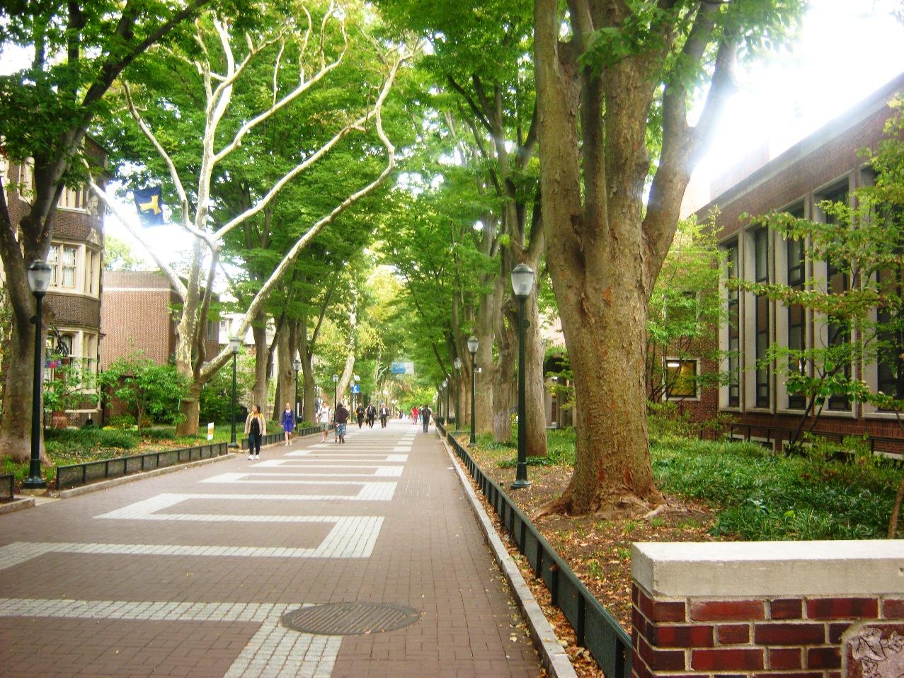 ペンシルバニア大学キャンパスの街路樹。
