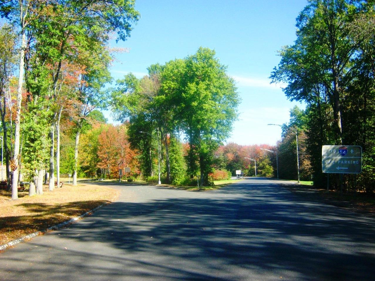 コネチカット州、紅葉の森。