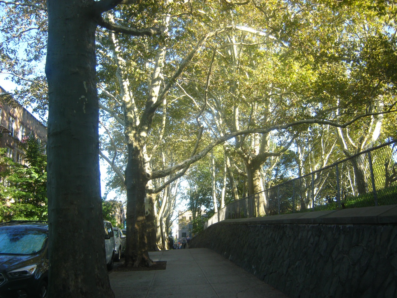 9月、サンセット公園の木々