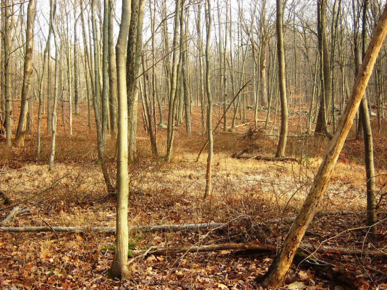 枯れ木の林